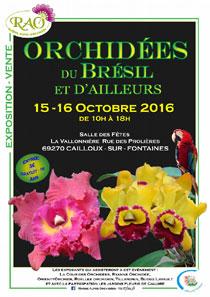 affiche-orchidee-du-bresil